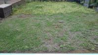 クラピアの草取り、その4 - うちの庭の備忘録 green's garden