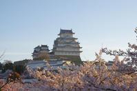 早朝の桜 in 姫路城(2019/4/13)其の⑤ - 南の気ままな写真日記