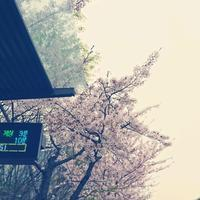 素敵なUCC動画発見!バブルシスターズさん「春は来るから」 - GreyDay ファン! (Good Rhythm Unlimited)