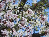5月7・8・9日は休業、営業再開は10日(金)8時~(2019年5月7日) - 北軽井沢スウィートグラス