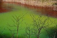 みどろ沼の水の色 - 風の香に誘われて 風景のふぉと缶