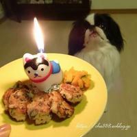お犬様の誕生日ディナー☆レンコン - 狆の茶々丸