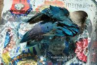 水浴びB.Bの記録(4月23日) - FUNKY'S BLUE SKY