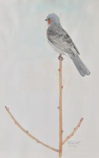 #野鳥スケッチ #ネイチャー・ジャーナル 『鵯』 Hypsipetes amaurotis - スケッチ感察ノート (Nature journal)