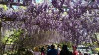 河内藤園(北九州市) - 何かを制覇するプロジェクト