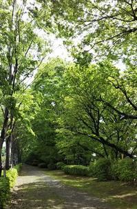 緑の散歩道と白いバラ - さんじゃらっと☆blog2