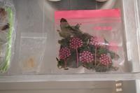 タイ料理、タイハーブの冷凍保存横浜タイ料理教室 - 日本でタイメシ ときどき ***
