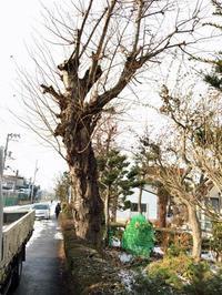 いえのえほん/桜の庭木がテーブルに - 『文化』を勝手に語る