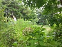 Kusaniwa Open Garden 2019ー 5月18.19日 ー開催 - Healing Garden  ー草庭ー