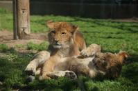 連休中の動物園と天王グリーンランド - Sugar&Spice