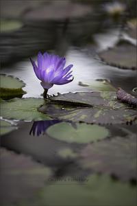 紫音 - 我夢工房
