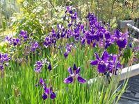 開花情報 - 手柄山温室植物園ブログ 『山の上から花だより』