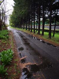 5月7日今日の写真 - ainosatoブログ02