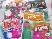"""""""花の種を撒いたよー!"""" ~ プランター菜園①2019年 初夏5月♪ ~ - 「ROMA」在旅写ライターKasumiの最新!イタリア&ローマあれこれ♪"""