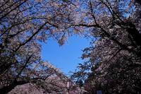 弘前公園 #3 - another eye