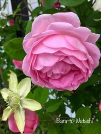 美しいコンスタンス スプライ - バラと私と時々、カルトナージュ