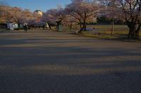 早朝の桜 in 姫路城(2019/4/13)其の⑥ - 南の気ままな写真日記