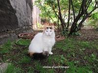 猫関係 - Wisdom of Cats