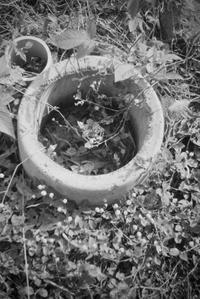 ✿姫蔓蕎麦 - ✿happiness✿