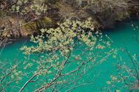 皐月の芽吹き - 風の香に誘われて 風景のふぉと缶