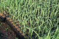 我が家の特栽米、田植えしました。 - 自然がいっぱい4