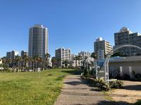 明海の丘公園のバラ - 浦安フォト日記