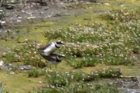 ★先週末の鳥類園(2019.4.29~5.6) - 葛西臨海公園・鳥類園Ⅱ