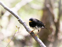三井の森 - Bird Healing