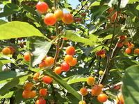 里芋を植えた - 自然農☆☆☆菜園日記