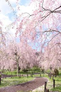 桜*米内浄水場 - kaoの小部屋