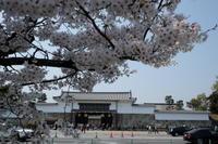 京都では、二条城もお見逃しなく。 - カマクラ ときどき イタリア