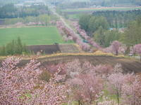 十勝の桜名所になった「桜六花公園」満開でした! - 十勝・中札内村「森の中の日記」~café&宿カンタベリー~