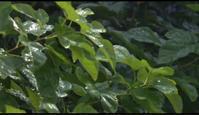 ドラマ 「やすらぎの刻〜道」 - マルベリークラブ中部 <自然の叡智を桑・蚕に学ぼう 環境保全・里山づくり>