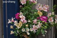 倉敷えびす通り商店街街角の花(ナチュラル) - 下手糞でも楽しめりゃいいじゃんPHOTO BLOG