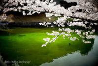 松本の桜(4) - Tullyz bis /R-D1ときどきM