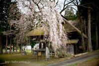 薬師堂の桜(1) - Tullyz bis /R-D1ときどきM