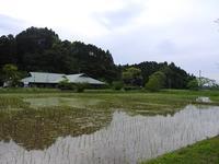 色々芽吹き始めました。 - 千葉県いすみ環境と文化のさとセンター