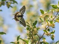 五月の風に蝶が舞う① - この道は風なり