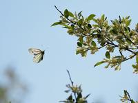 五月の風に蝶が舞う② - この道は風なり