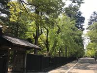 新緑の武家屋敷通り - 仙北市農山村体験デザイン室
