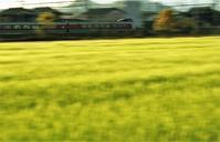 麦畑 - ゆる鉄旅情