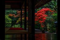 キリシマツツジ咲く大雄院(妙心寺塔頭) - 花景色-K.W.C. PhotoBlog