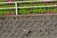 5/9お写ん歩写真 - SWAN