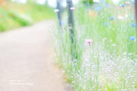 散歩道 - jumhina biyori*