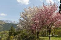 北信越へ(春)4 - 季節のおくりもの