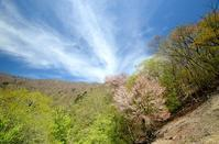 新緑の尾根を歩く明神岳~千石山 - 峰さんの山あるき