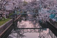 桜2019 - 写真部