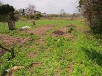今年最初の庭の草取り・・。 - あいやばばライフ