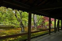 東福寺~新緑の庭~ - ぶらり休暇