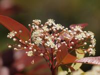 『季節の花追い~』 - 自然風の自然風だより